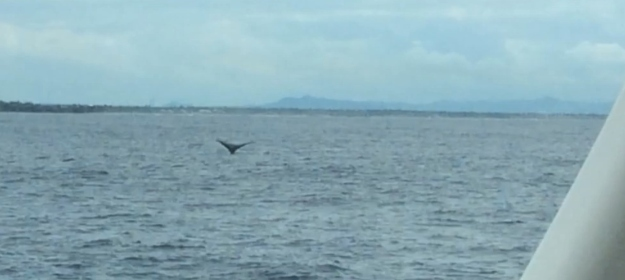 Whale breaching the surface just off our port side