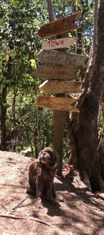 Patton pointing the way on the Quill volcano trail, Statia
