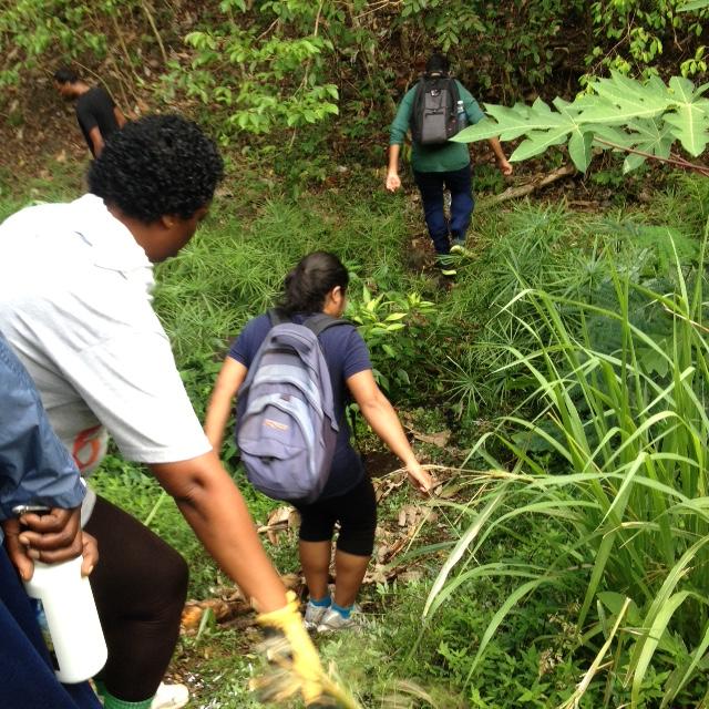 Grenada Hash hike - crossing streams