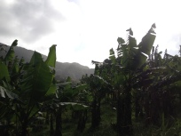 Grenada countryside hike