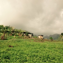 Grenada countryside