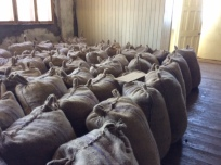 Burlap Sacks Ready for Export