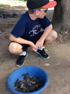 Ryan, Levera Bay, Leatherback turtles