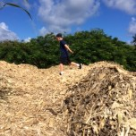 Ryan on the cane mulch pile