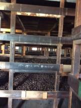 Nutmeg Air Dried in Shells (6-8 weeks