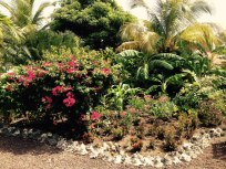 Port Louis Marina Garden