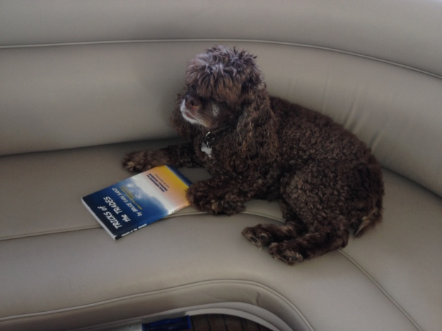 Patton reading Tricks of the Trades by Bruce Van Sant