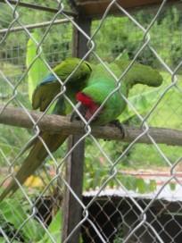 Belmont Bird