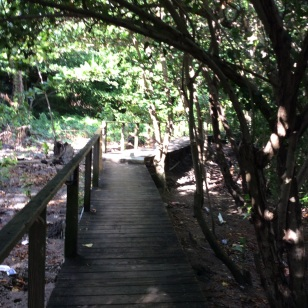 Hike Behind the Rain Forest Café, Marigot Bay, St. Lucia