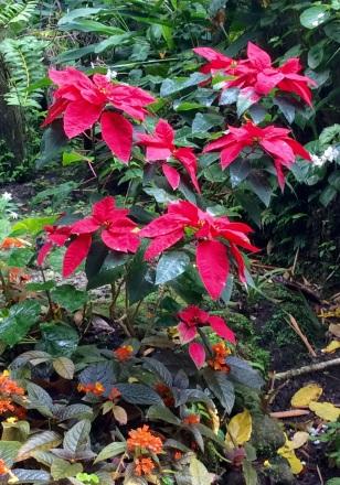 St. Lucia, Botanical Gardens