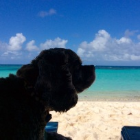 Patton, Loblolly Beach, Anegada, BVI