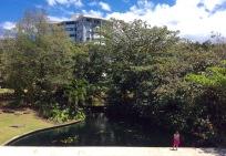 Koi Pond, Gardens, Museo de Arte de Puerto Rico
