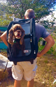 Randy with Patton in his jet pack, ready to go hiking in St. Bart