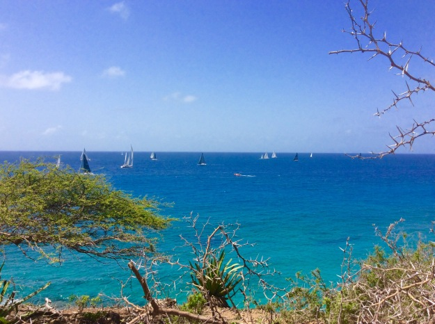 Antigua Sail Week 2016