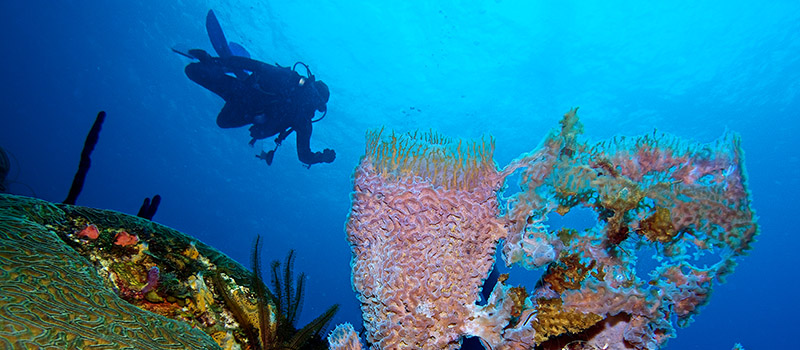 Open water dive, St. Lucia