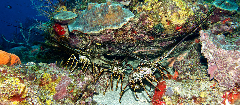 Open water Dive St. Lucia photo