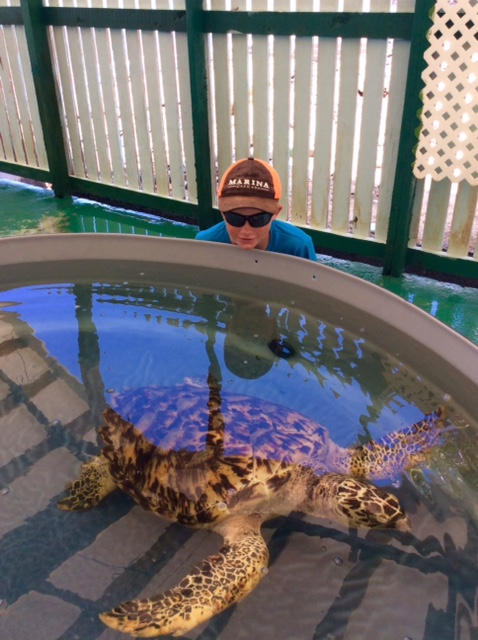 Ryan admiring a 17 year old Hawksbill Turtle at the Old Hegg Turtle Sanctuary, Bequia