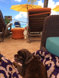 Patton relaxing on the beach, Mount Cinnamon Resort, St. George's, Grenada