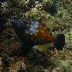 Molinere Bay, Grenada