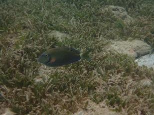Underwater Sculpture Park, Molinere Bay, Grenada