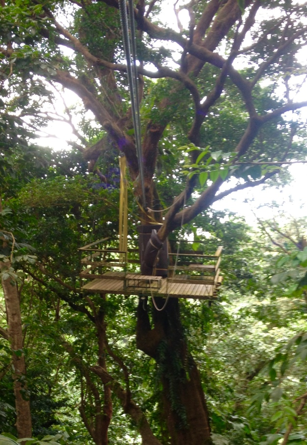Tree top platform, Rain Forest Adventures, St. Lucia