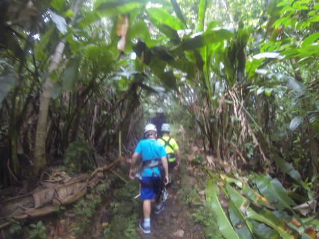Hiking through the rain forest, St. Lucia