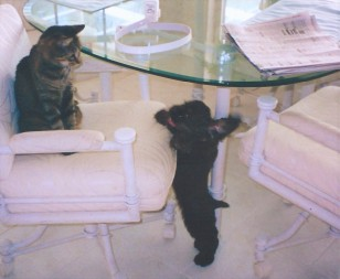 Puppy Patton playing with a cat