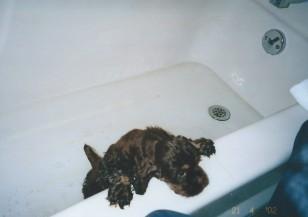 Puppy Patton gettng a bath