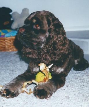 Puppy Patton