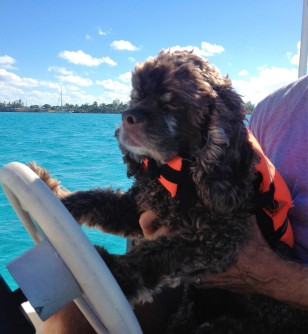 Driving the dinghy, Bahamas