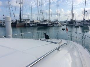 Stow away, Nanny Cay Marina, Tortola, British Virgin Islands