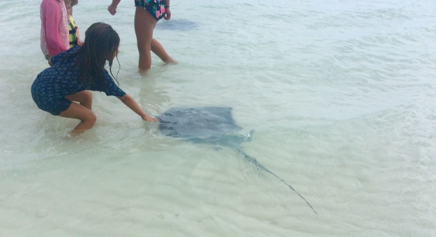Kids feeding & petting Stingray at Volley Ball Beach, George Town, Exumas, Bahamas (May 2018)