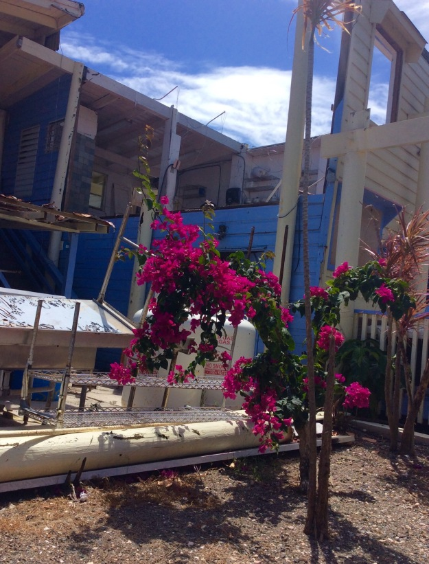 Flowers blooming in front of destroyed Peg Legs Reestaurant, Nanny Cay, Tortola, BVI (March 2018)