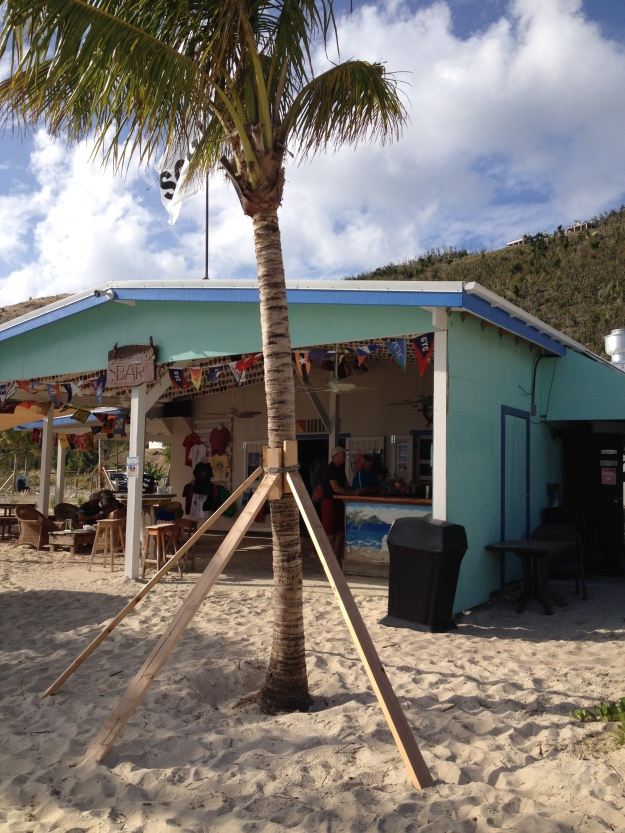 New palm trees outside Soggy Dollar, White Bay, Jost Van Dyke, BVIs (March 2018)