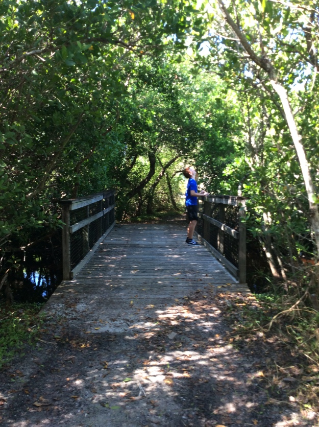 Ryan on the nature trail, Caladesi Island State Park (Nov. 2019)